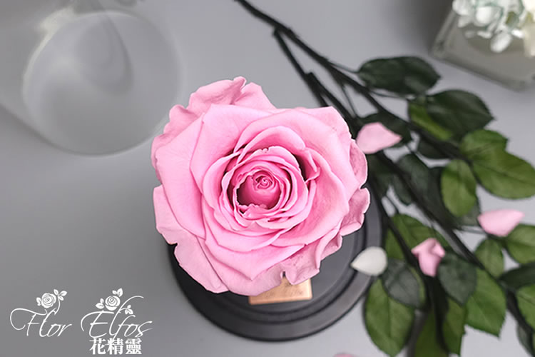 Flor-Elfos_1P-06
