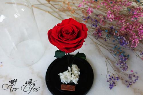 Flor-Elfos_1R-06