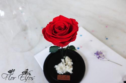Flor-Elfos_1R-08
