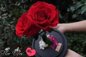 Flor-Elfos_2R-02